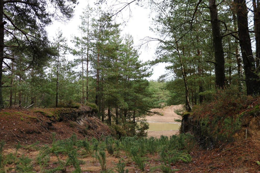 Bordon Forestry