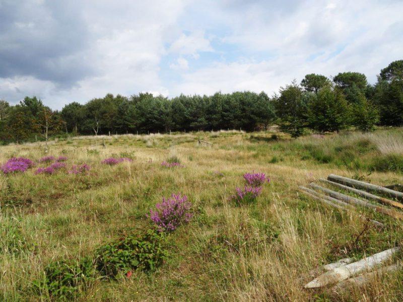 Upton Heath SSSI